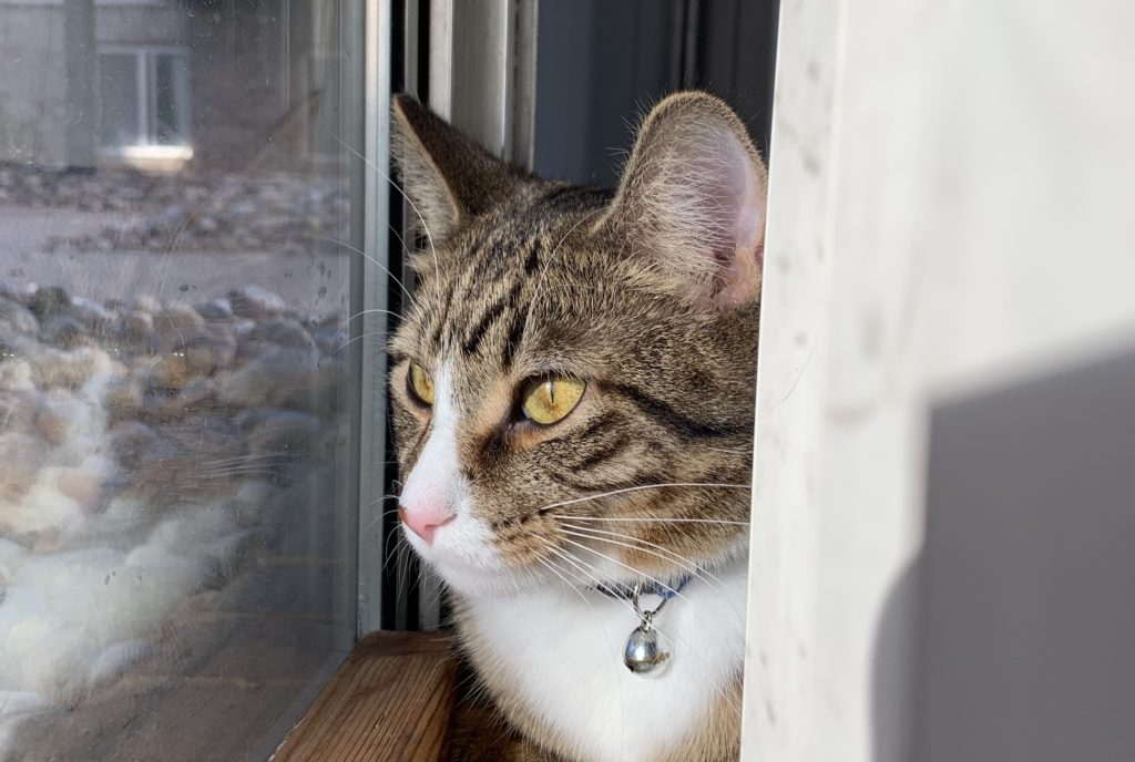 Sideview of a cat looking out a window